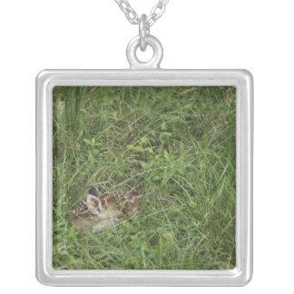 Collier cerfs communs Blanc-coupés la queue, virginianus