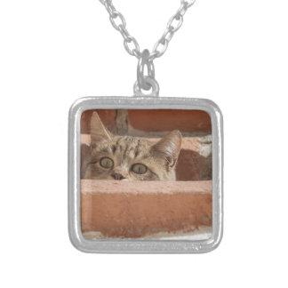 Collier Chat sauvage curieux d'attention des plots
