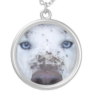 Collier chien de traîneau sale