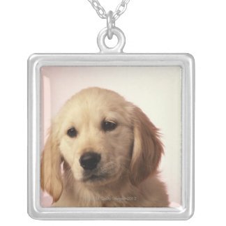 Collier Chiot de golden retriever