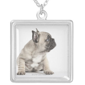 Collier Chiot de pure race