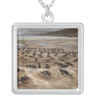 Collier Colonie de pingouin de Gentoo (Pygoscelis