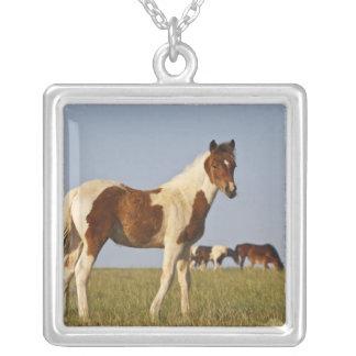 Collier Colt sauvage de caballus d'Equus de cheval) avec