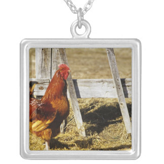 Collier Coq de rouge d'île de Rhode