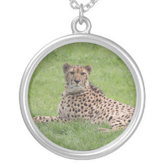 Collier de guépard