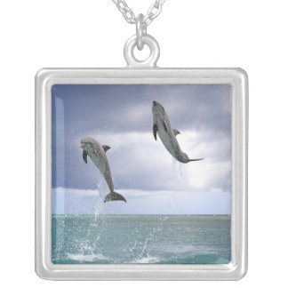 Collier Delfin, Delphin, Tuemmler plus brut, Tursiops 2