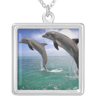 Collier Delfin, Delphin, Tuemmler plus brut, Tursiops 4