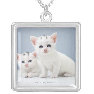 Collier Deux chatons blancs très jeunes regardent fixement