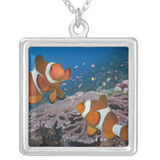 Collier Deux Clownfish