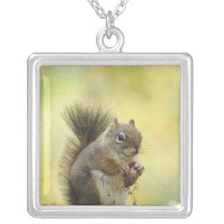 Collier Écureuil rouge, écureuil de pin, Tamiasciurus
