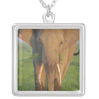 Collier Éléphant d'Asie alimentant, parc national de