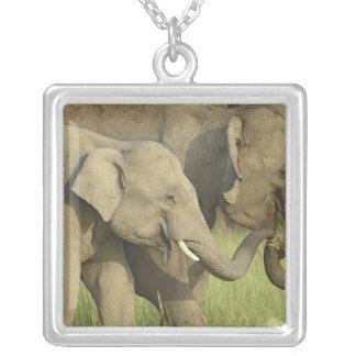 Collier Éléphant indien/asiatique demandant la nourriture