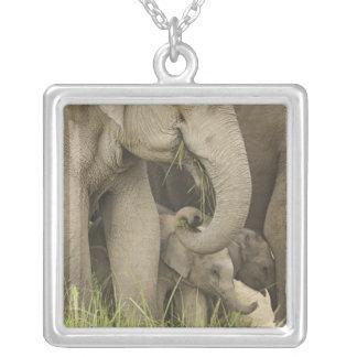 Collier Éléphant indien/asiatique et jeunes un, Corbett 3