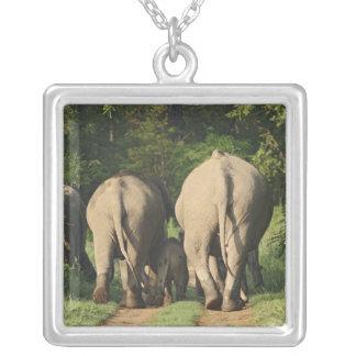 Collier Éléphants d'Asie sur la voie de jungle, Corbett