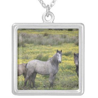 Collier En Irlande occidentale, trois chevaux avec