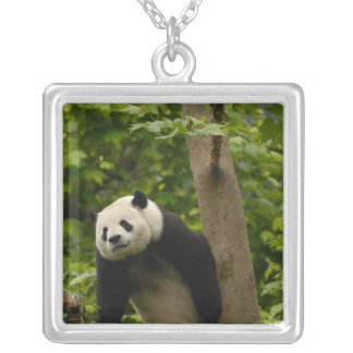 Collier Famille de melanoleuca d'Ailuropoda de panda