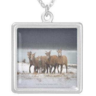 Collier Famille de moutons de montagne