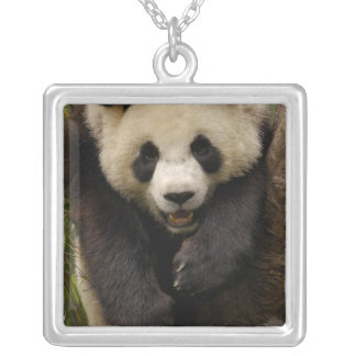 Collier Famille de panda géant (melanoleuca d'Ailuropoda)