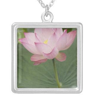 Collier Fermez-vous de la fleur de Lotus, du nucifera de