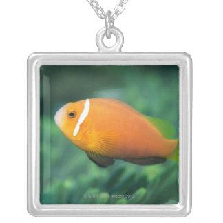 Collier Fermez-vous des poissons d'anémone des Maldives,