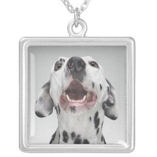 Collier Fermez-vous d'un chien dalmatien