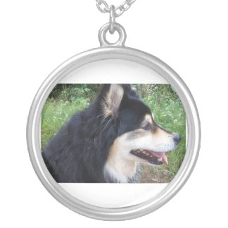 Collier finnish-lapphund-.png