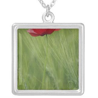 Collier Fleur rouge de pavot parmi la culture de blé,