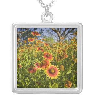 Collier Fleurs sauvages de pulchella de Gaillardia de