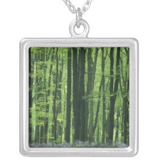Collier Forêt de l'Angleterre, du hêtre et jacinthes des