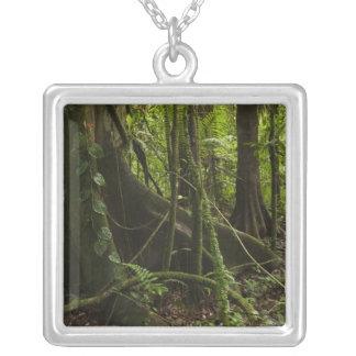 Collier Forêt tropicale, rivière Rupununi du nord de