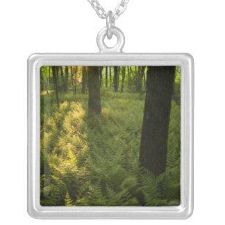 Collier Fougères dans la forêt dans Grafton, le