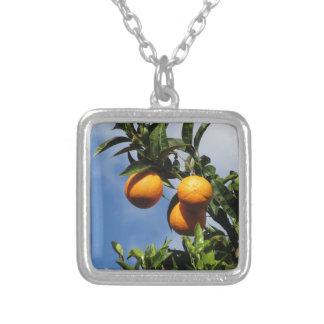 Collier Fruits oranges accrochant sur l'arbre contre le