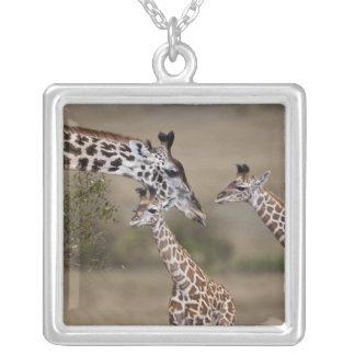 Collier Girafe de Maasai (girafe Tippelskirchi) comme vu