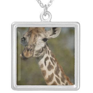 Collier Girafe de masai, camelopardalis de Giraffa