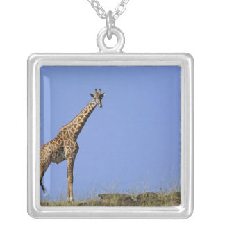 Collier Girafe, sur l'arête contre le ciel bleu, Giraffa