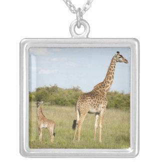 Collier Girafes de masai, camelopardalis 3 de Giraffa