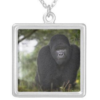 Collier Gorille de montagne et Silverback 3