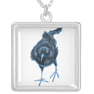 Collier grackle amer