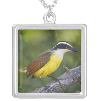 Collier Grand adulte de Kiskadee été perché
