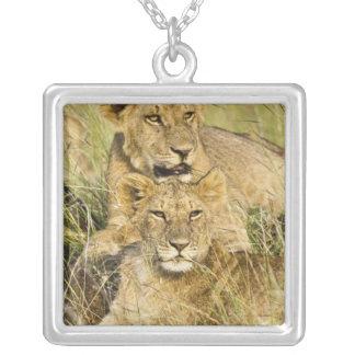 Collier Groupe de petits animaux de lion, Panthera Lion,