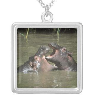 Collier Hippopotame, (amphibius de H.), mère et jeunes
