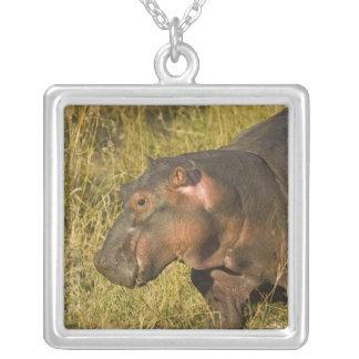 Collier Hippopotame de bébé hors de l'eau à partir des