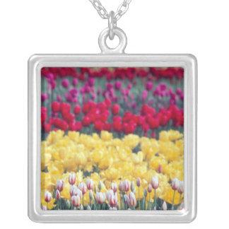 Collier Jardin d'affichage de tulipe dans la vallée de