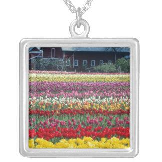 Collier Jardin d'affichage de tulipe, le comté de Skagit,