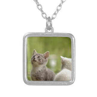 Collier Jeune nature animale sauvage curieuse animale de