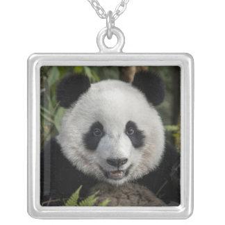 Collier Jeune panda heureux, Chine