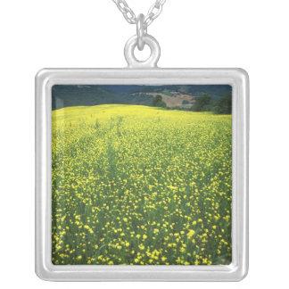 Collier La belle fleur jaune a couvert des champs de San