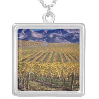 Collier La Californie, le comté de San Luis_obispo, vallée