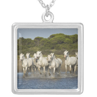 Collier La France, Camargue. Chevaux courus par l'estuaire