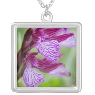 Collier La Grèce, Crète. Orchidée de papillon en fleur